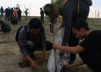 Proses menanam bibit pohon cemara di Pantai Ketaping, Padang Pariaman pada Sabtu (9/11/2019). (Foto : Fildzatil Arifa)